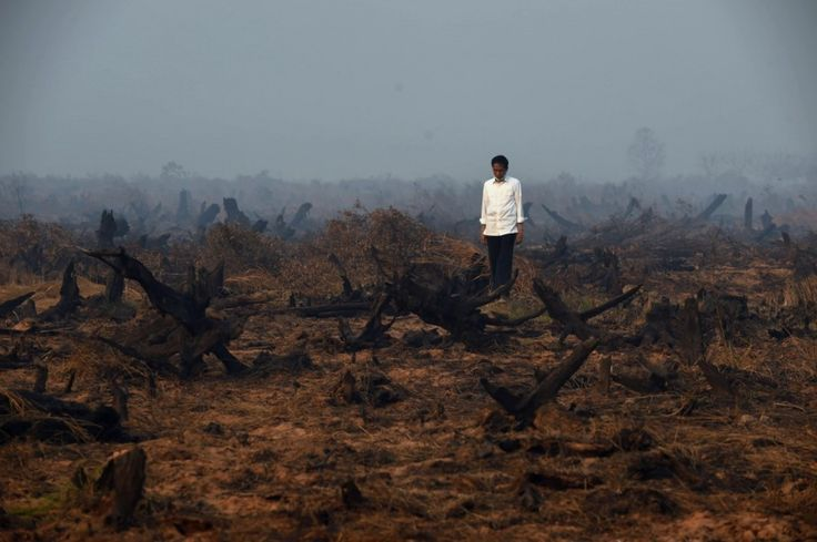 Indonesian president cuts short U.S. trip due to catastrophic fires and carbon emissions at home - The Washington Post