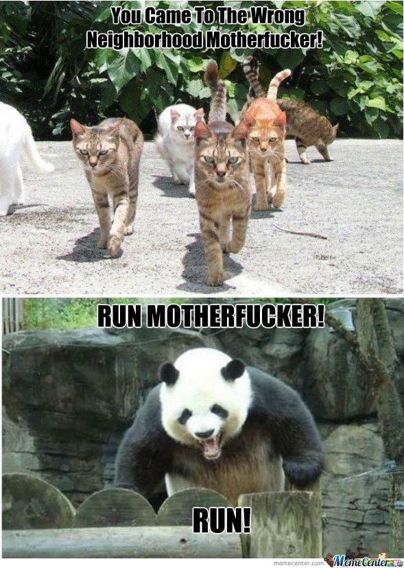 gangsta memes   RMX] Gangsta Cats!