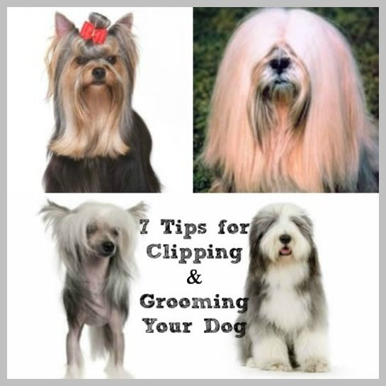 81 best pets images on pinterest doggies cute kittens and cowboy magic grooming products dog articles archives page 3 of 3 cowboy magic grooming products solutioingenieria Gallery