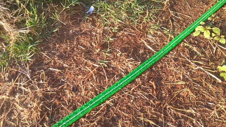 This is a cheapy sprinkler hose that I used to wrap around the rows of corn. Watering from the bottom down is the best way to go especially when the corn begins to produce pollen. Top down watering can hinder the pollination. Water left on leaves can also promote disease and fungus.