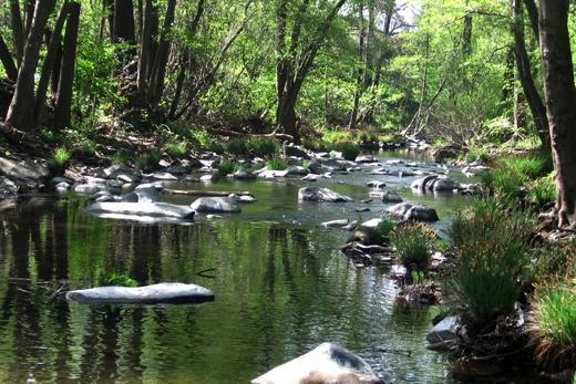 wading in creeks: Aunt, Back Yard, Kid