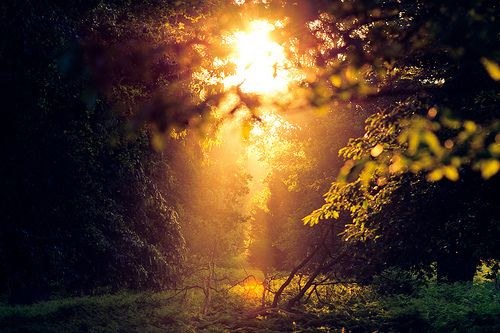 ~Lights, Forests, Distance, God, Nature, Peace, Beautiful, Sun, Photography