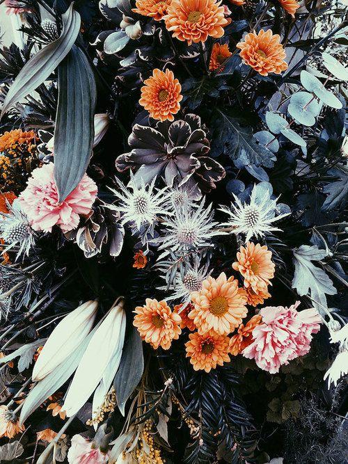 color palette / alisha farnan #floral