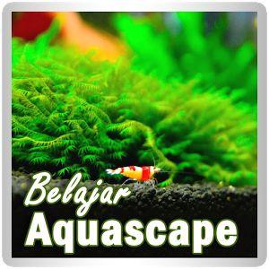 Belajar Aquascape