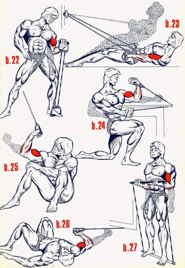 Sports & Santé : Comment Muscler chaque partie du corps : Explication Par Image