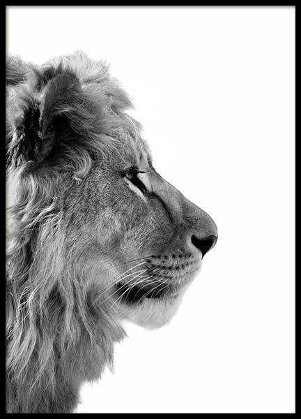 Lion From Side Poster im Gruppenposter / Größen und Formate / 50x70cm bei …