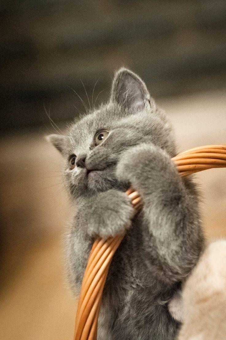 Cute softness by Paulius Giedraitis