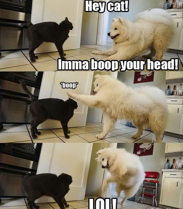 Crazy #dog and #cat I bet this makes you laugh!