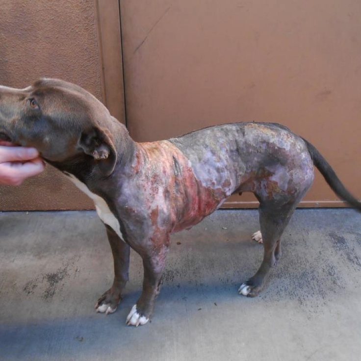 Help save Tess!!! Chipin for 6 month old pup dumped with 3rd degree burns