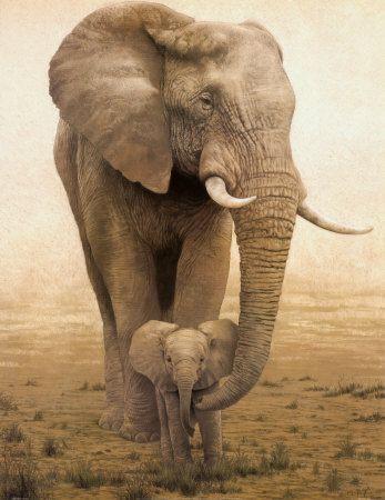 Mummy and baby elephant