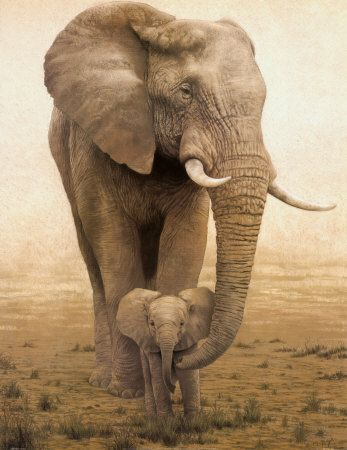 Mommas Boy Mother Baby Elephant Calf Safari Wall Art Print I Will