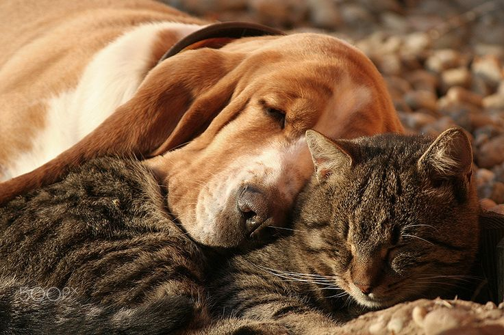 1000 Images About Cats Dogs Best Friends On