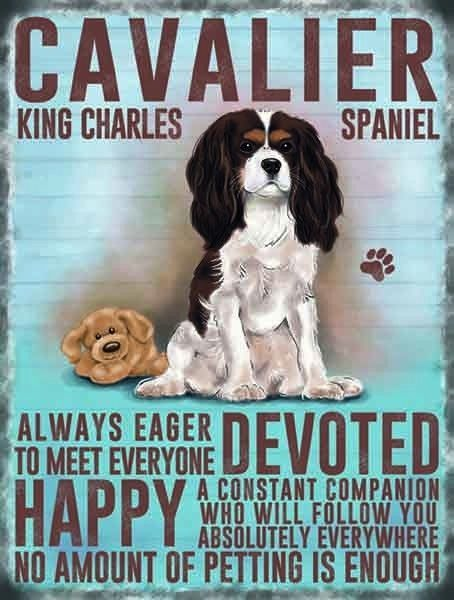 "CAVALIER KING CHARLES SPANIEL 12""X 8"" MEDIUM METAL SIGN WITH CHARACTER TRAITS in Collectables, Animals, Dogs 
