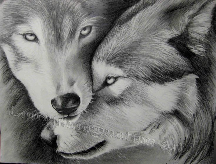 Best 25 tattoos of wolves ideas on pinterest forest art fox two wolves ccuart Images