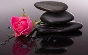 Обои галька, розовые розы, бутоны, цветы, капли воды