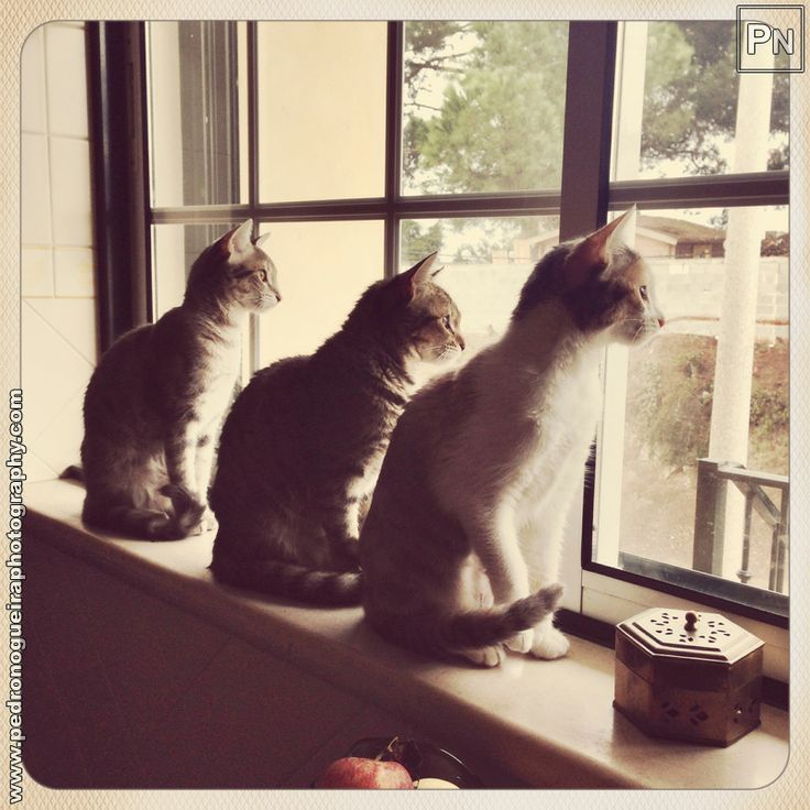 "351 ""Three sisters at the window"" Mobile phone - Project 365 - A photo per day throughout the year."