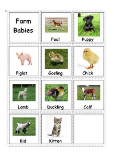 Adapted Book Farm Animals And Their Babies For