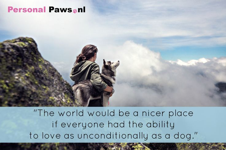 Quote hond week 24 Personal Paws