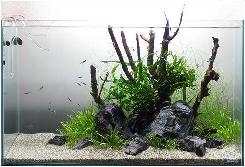 60cm水槽をリセット!ミクロソリウムやアヌビアスを追加! | GRASS DESIGN+ 水草・熱帯魚・ネイチャーアクアリウム系ブログ