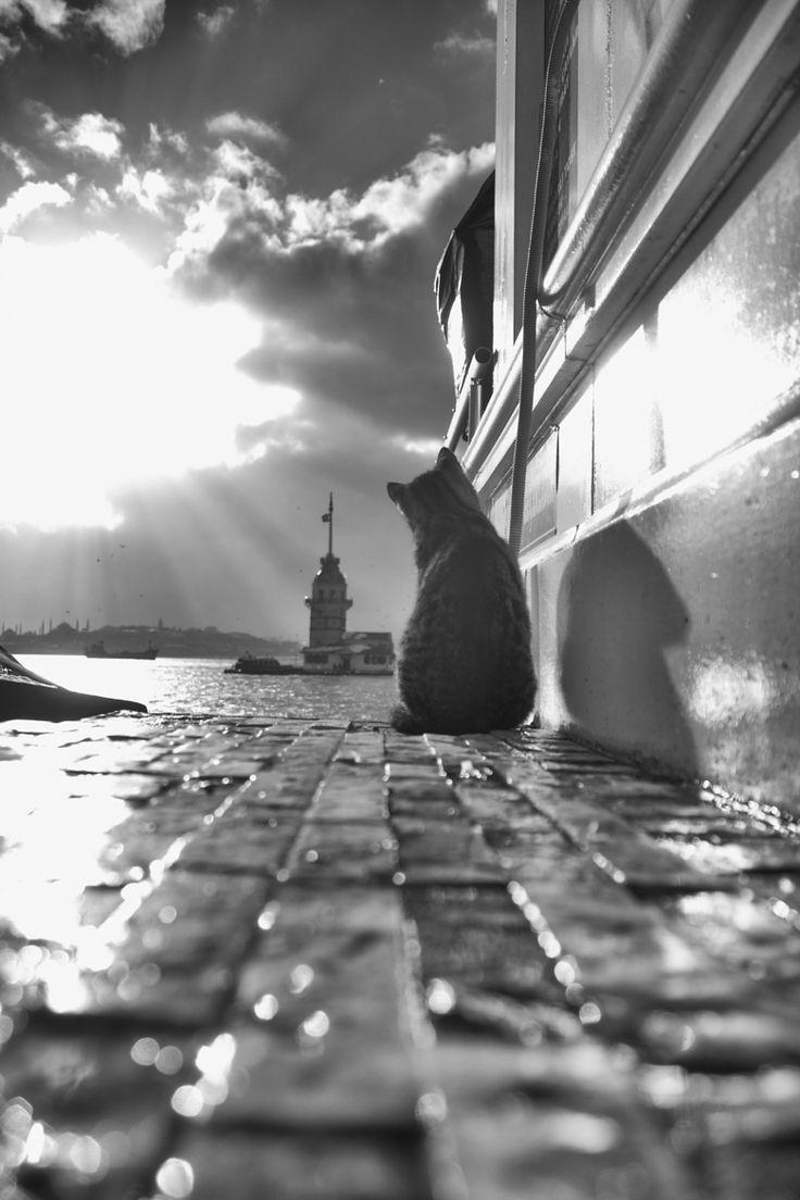 Kitty watching the sunset