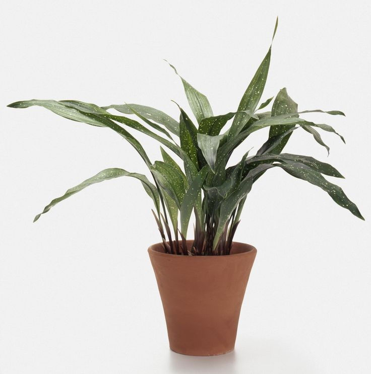 The leathery leaves on this houseplant are super tolerant not only to low light but also heat, cold, you name it. However, patience is required since it grows super slowly.   - HouseBeautiful.com