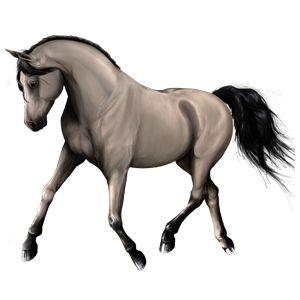 Hidalgo, Pferd Orlow-Traber Brauner #7267901 - Howrse