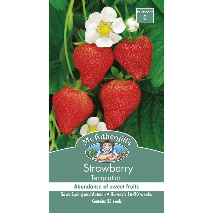 Mr Fothergill's Strawberry Temptation Seeds | Bunnings Warehouse