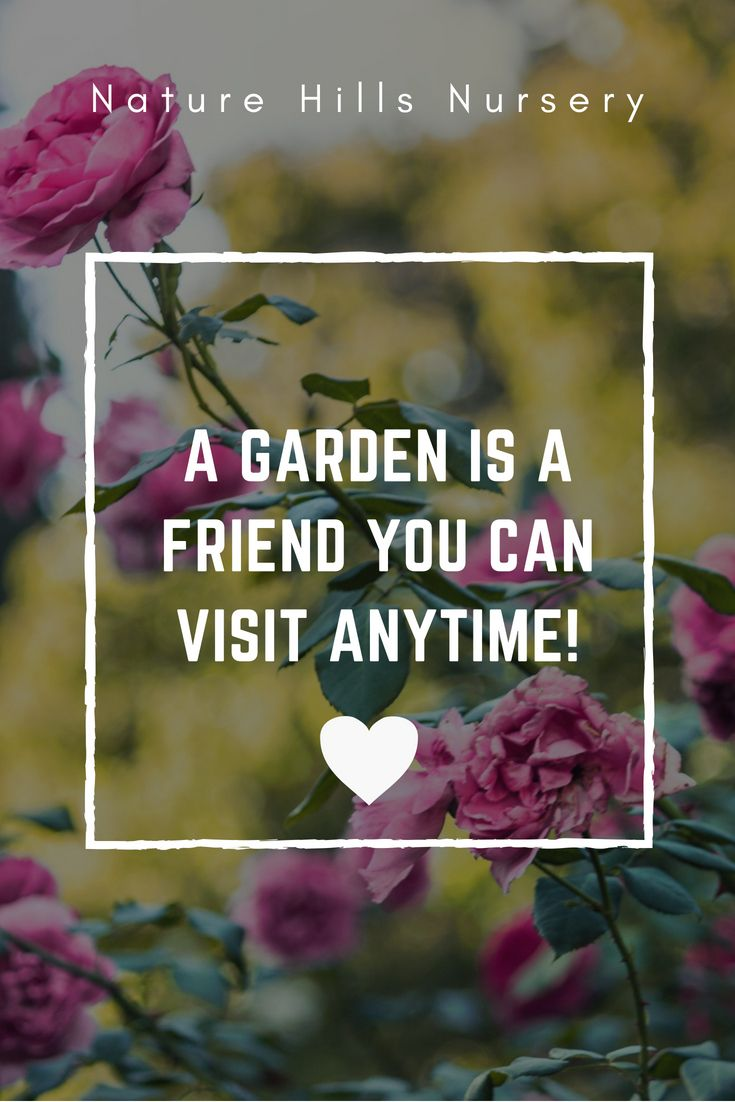 A garden is a friend gardening quotes