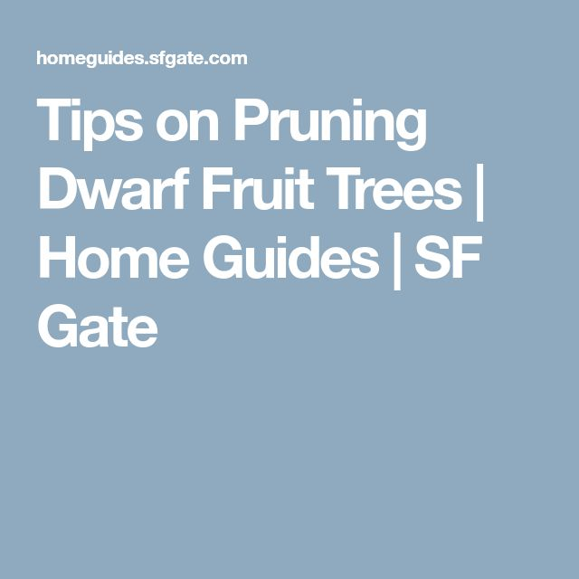 Tips on Pruning Dwarf Fruit Trees | Home Guides | SF Gate
