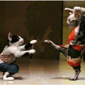 Ninja Cat Fight Funny Wallpaper | ninja cat fight funny wallpaper 1080p, ninja cat fight funny wallpaper desktop, ninja cat fight funny wallpaper hd, ninja cat fight funny wallpaper iphone