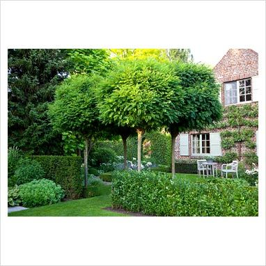 Country garden with standard Robinia pseudoacacia 'Umbraculifera' trees and a trained pear tree on house wall - Photo by Elke Borkowski