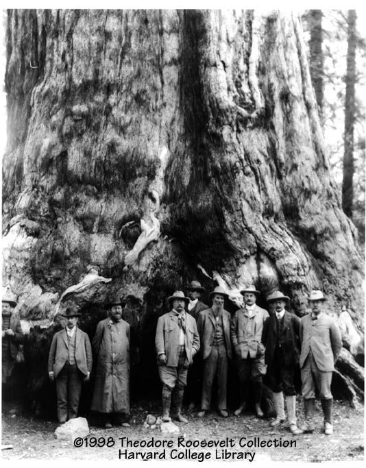 Can you imagine a tree so big that a whole group of grownups looks so tiny? Here we find President Theodore Roosevelt with naturalist John Muir at Yosemite in 1903.