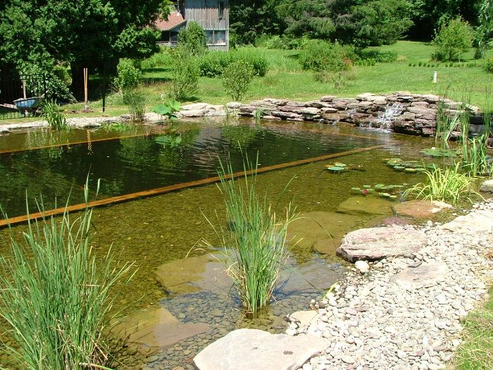 17 best images about natural swimming pool ideas and plans for Koi pond natural swimming pool