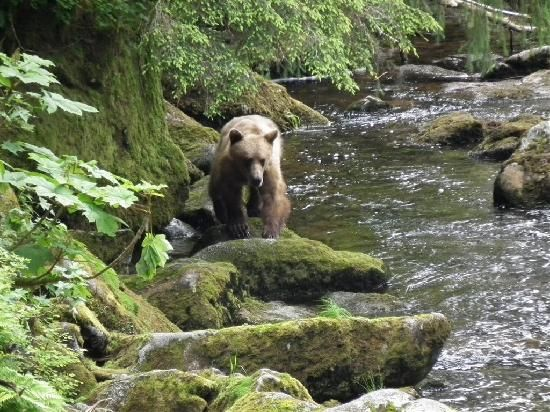 Anan Creek Bear Observatory  Add to trip Tongass National Forest, Wrangell, AK