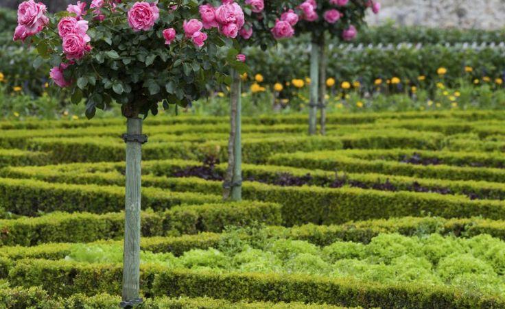 17 best images about zierg rten on pinterest manche buddleja davidii and magnolias. Black Bedroom Furniture Sets. Home Design Ideas