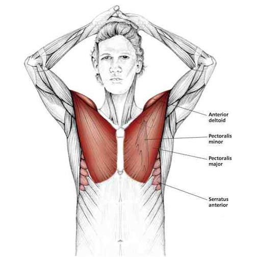 Above the Head chest Stretch - Common Shoulder Stretching Exercises   FrozenShoulder.com