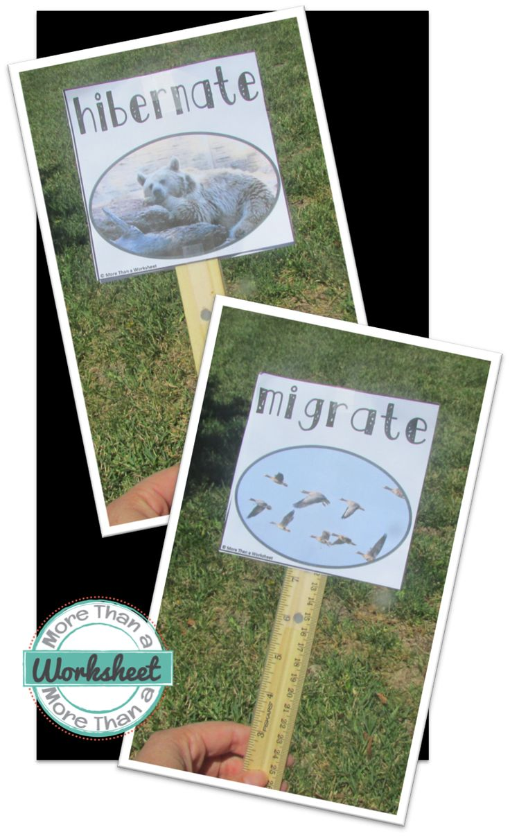 A simple hibernate migrate game…just like red-light green light! Great way to teach vocab kinesthetically. Free printable from More Than a a Worksheet