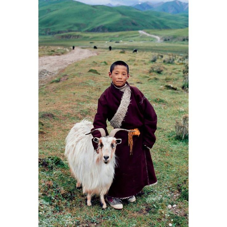 Photo by @stevemccurryofficial // I photographed this young nomad boy and his family's goat near Litang Tibet a major center of Tibetan culture. With an elevation of nearly 4000 metres (13000 ft) it has a subarctic climate characterized by long cold winters and short summers. These goats produce fine cashmere wool highly prized for clothing and textiles. #tibet #litang by natgeo