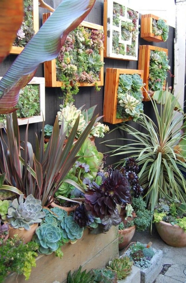 Vertical Garden DIY: Cover up an ugly fence with this unique take on the vertical garden. Just pick up some old frames at your local thrift store and fill 'em with colorful succulents. (via Sky Parlour)