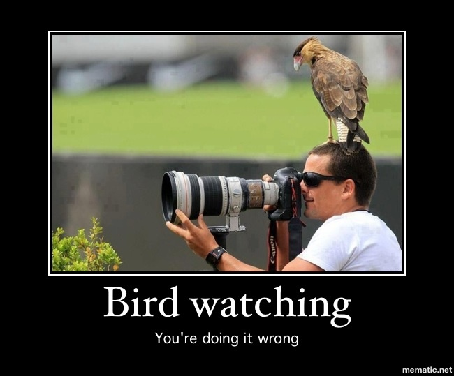 bird watching you re doing it wrong animal kingdom