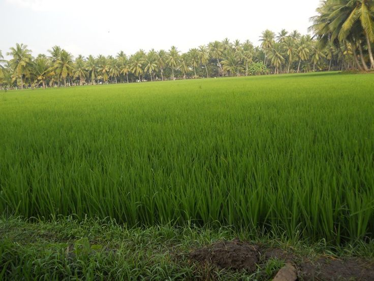 Agricultural land for sale in Sangareddy  surroundings Up to 10 kms near to main road  80 Lakhs  to 1 Crore  Negotiable per acres  After  Sangareddy 40 Lakhs to 60 Lakhs
