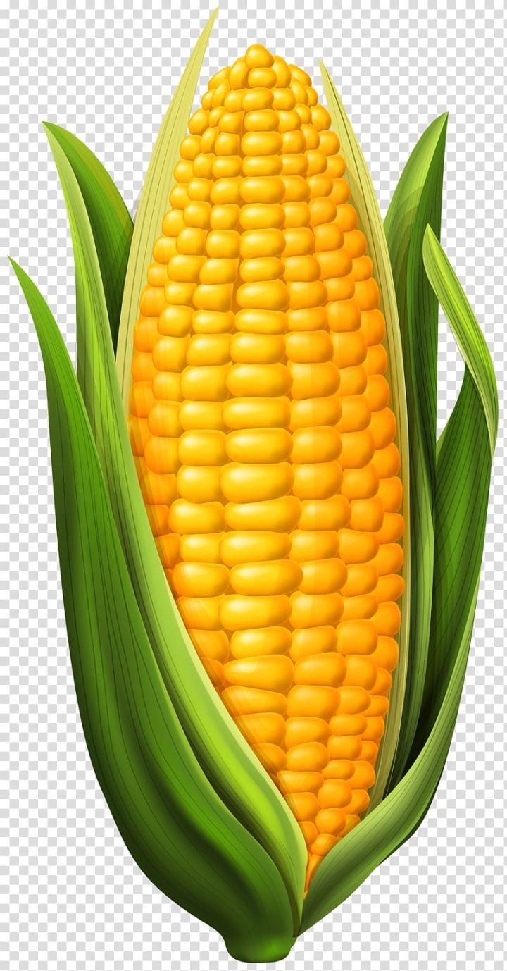 Yellow Corn Illustration Corn On The Cob Maize Corn Transparent Background Png Clipart Vegetable Drawing Vegetable Pictures Vegetable Painting