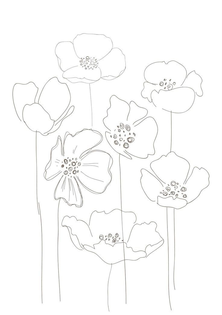 Line Drawing Poppy Flower : Ideas about simple flower drawing on pinterest