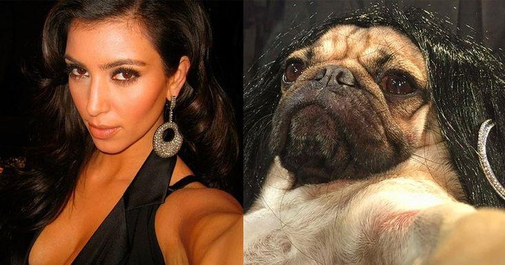 Многие завидуют Ким Кардашян, кто-то является ее фанатом, есть даже те кто пытается быть на нее похожим. Но чтобы этим занимался мопс, я еще не видел