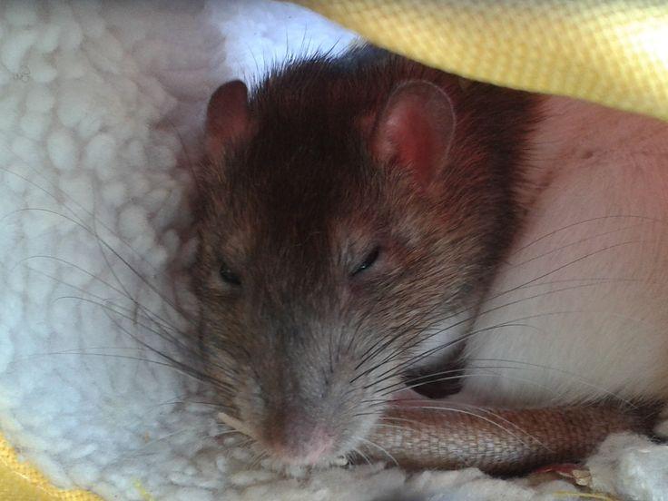 Yang slaapt lekker.