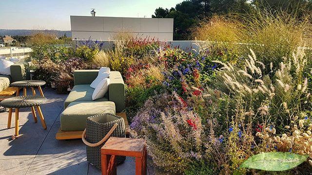 Azotea de mil colores.. #projects #gardendesign #garden ...