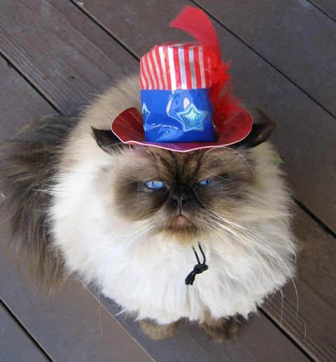 May The 4th Be With You Cat: 83 Best Paws-itively Patriotic Pets Images On Pinterest