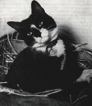 Able Seacat Simon in quarantine in the U.K., cats in war, war cats, ships cats