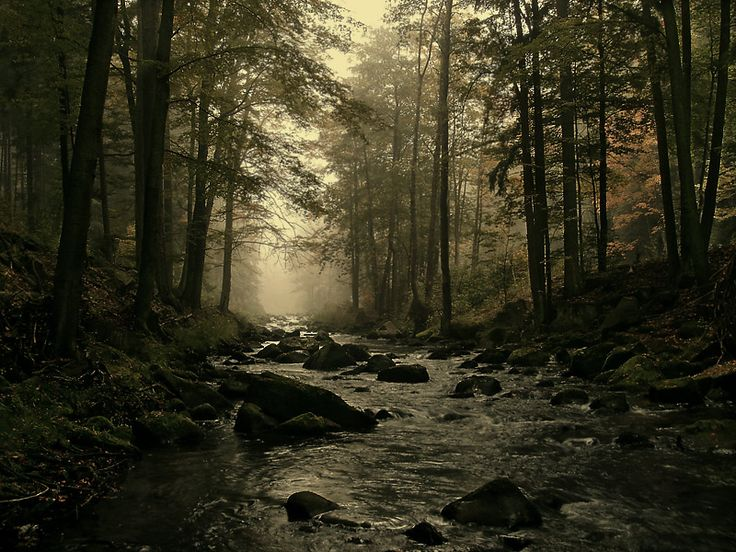 Dark River - Polanica, Dolnoslaskie