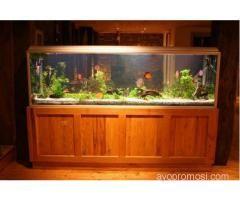 Bali Reef Aquarium #ayopromosi #gratis http://www.ayopromosi.com
